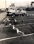 Crystal Pier gulls 1972 by Jennifer K
